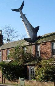 The Shark House